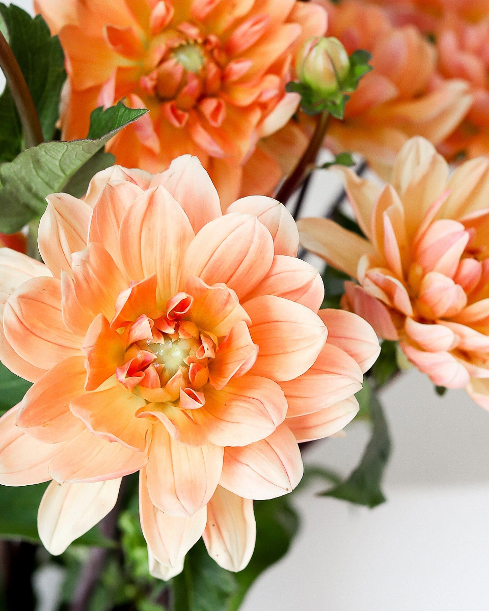 gfmi faith flowers